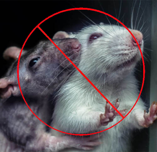 写字楼灭老鼠