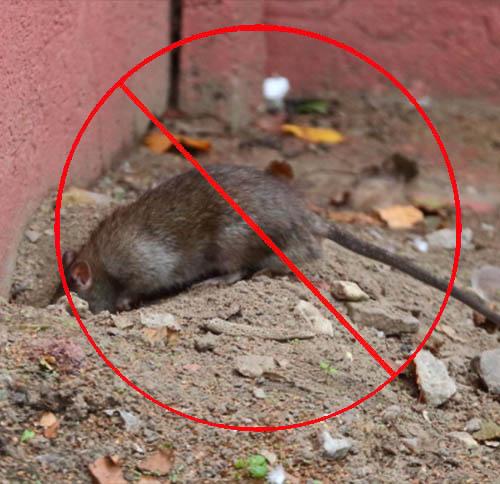 库房灭老鼠