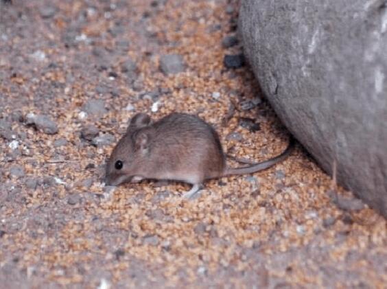 工厂灭老鼠