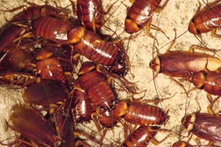 西安灭蟑螂公司分享鞋柜快速灭蟑螂的方法
