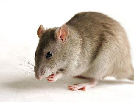 西安灭鼠防治措施说明