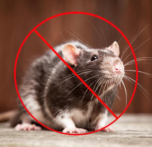 灭鼠很好的方法之防鼠设施