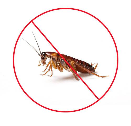 卧室灭蟑螂