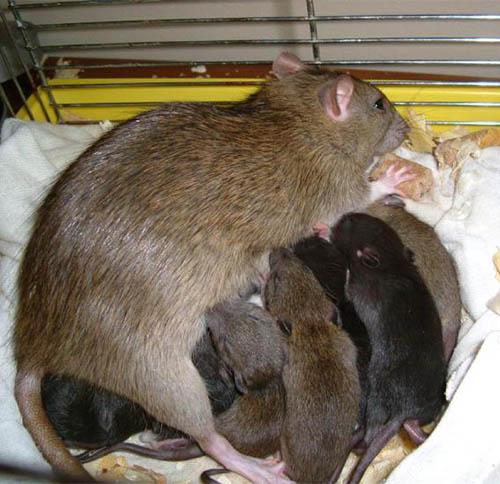 生物灭老鼠