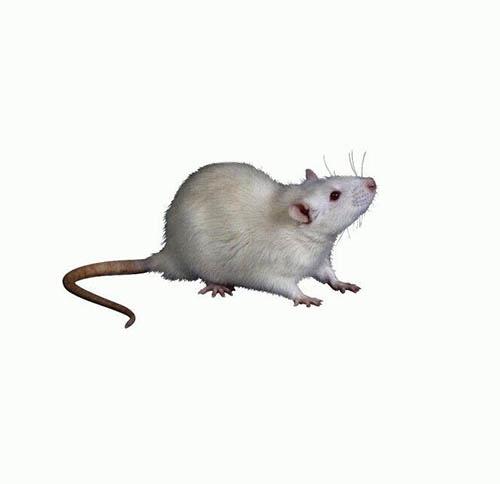 彻底灭老鼠