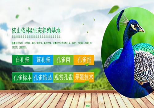 凤缘农业孔雀养殖加入铭赞百度营销推广计划一年