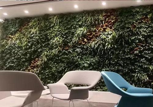 室内绿植墙