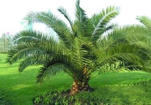 简单的仿真树制作流程