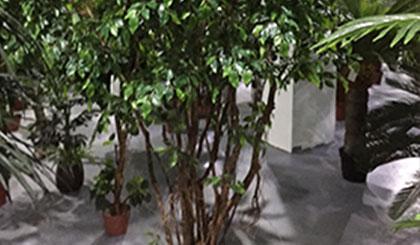 仿真树与自然树体有什么区别?
