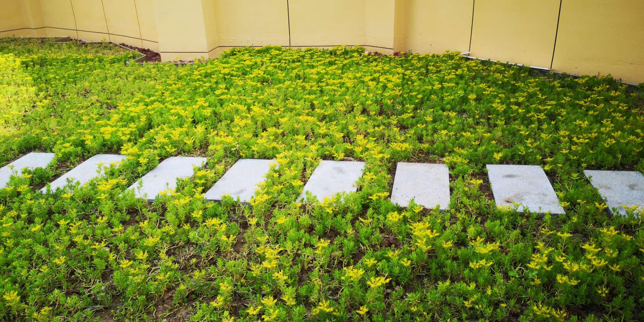 组合式屋顶绿化容器高效解决屋面生态种植方案