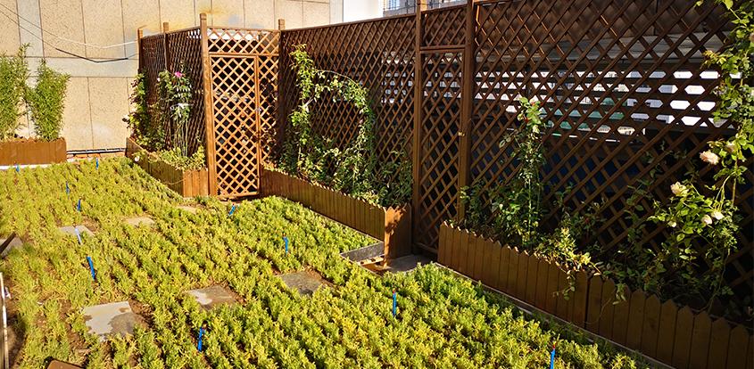 植物墙导致植物水分的流失的因素