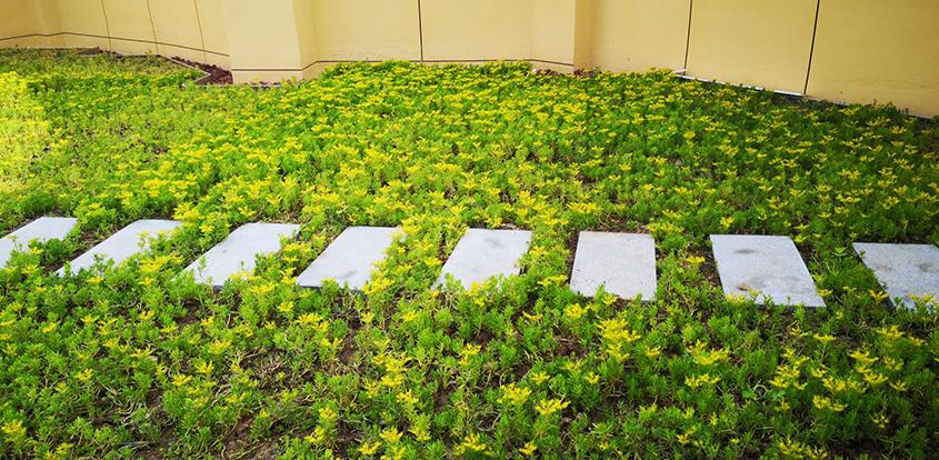 浅谈植物墙在庭院绿化中的重要作用
