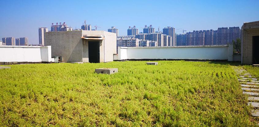 屋顶绿化的特殊性是什么?