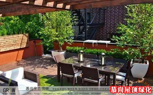 屋頂綠化育苗