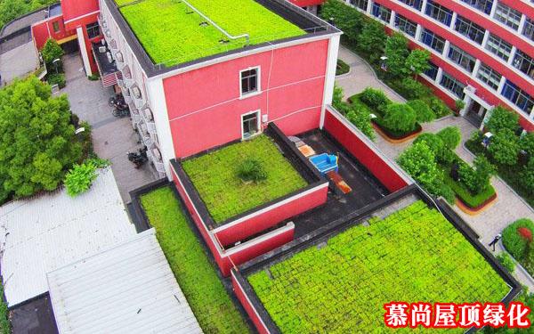 屋頂綠化盆栽