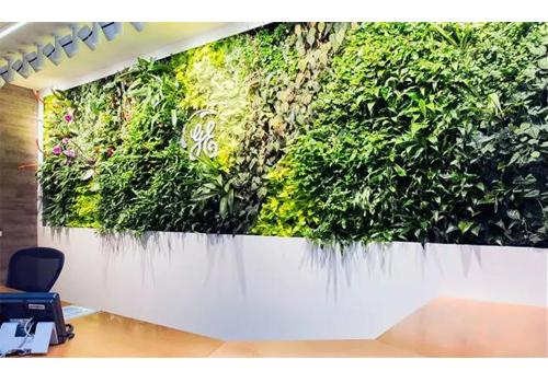 办公室青藤植物墙