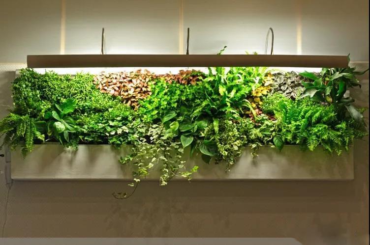 西安室内植物墙设计
