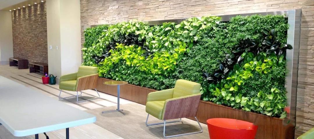 西安墙体绿化