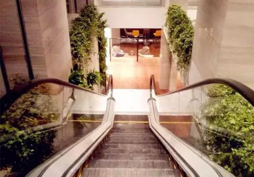 楼梯生态植物墙