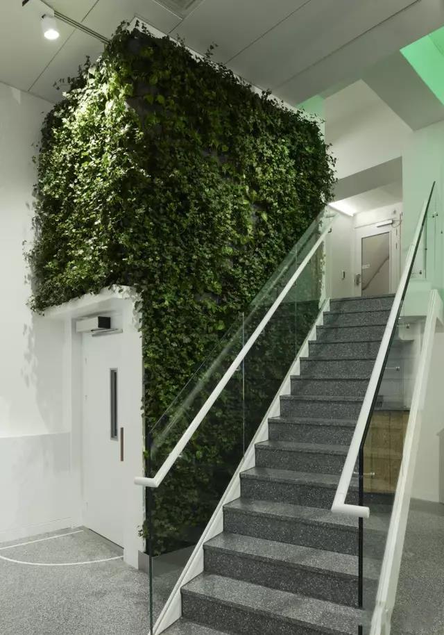楼梯植物墙设计
