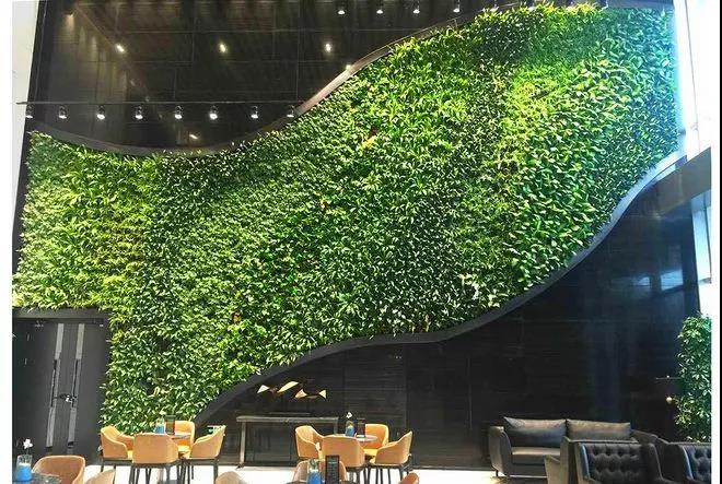 室内植物墙选择苔藓有哪些优势