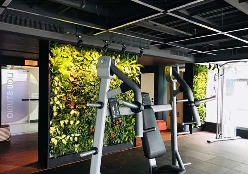西安力偶健身房室内植物墙施工案例展示