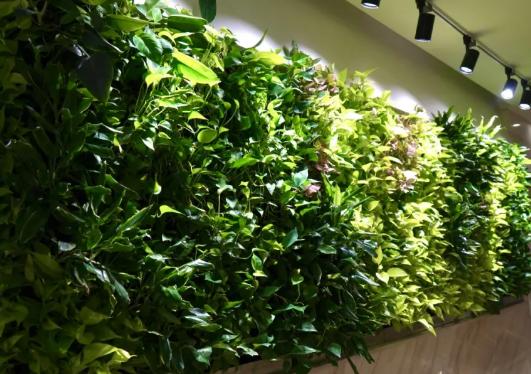 室内植物墙日常养护的要点