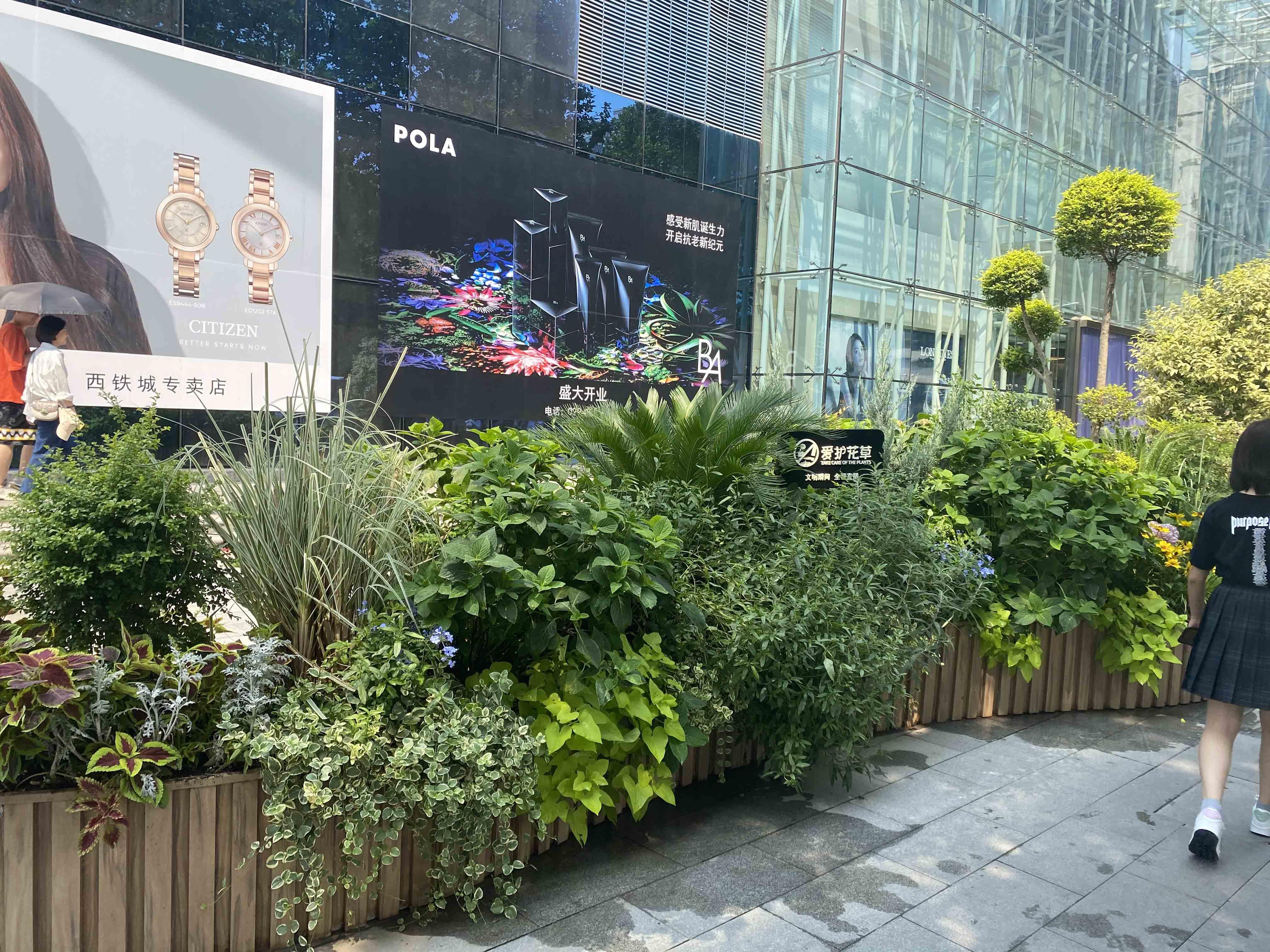 广场绿植景观
