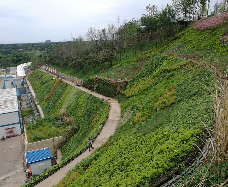 户外边坡垂直绿化