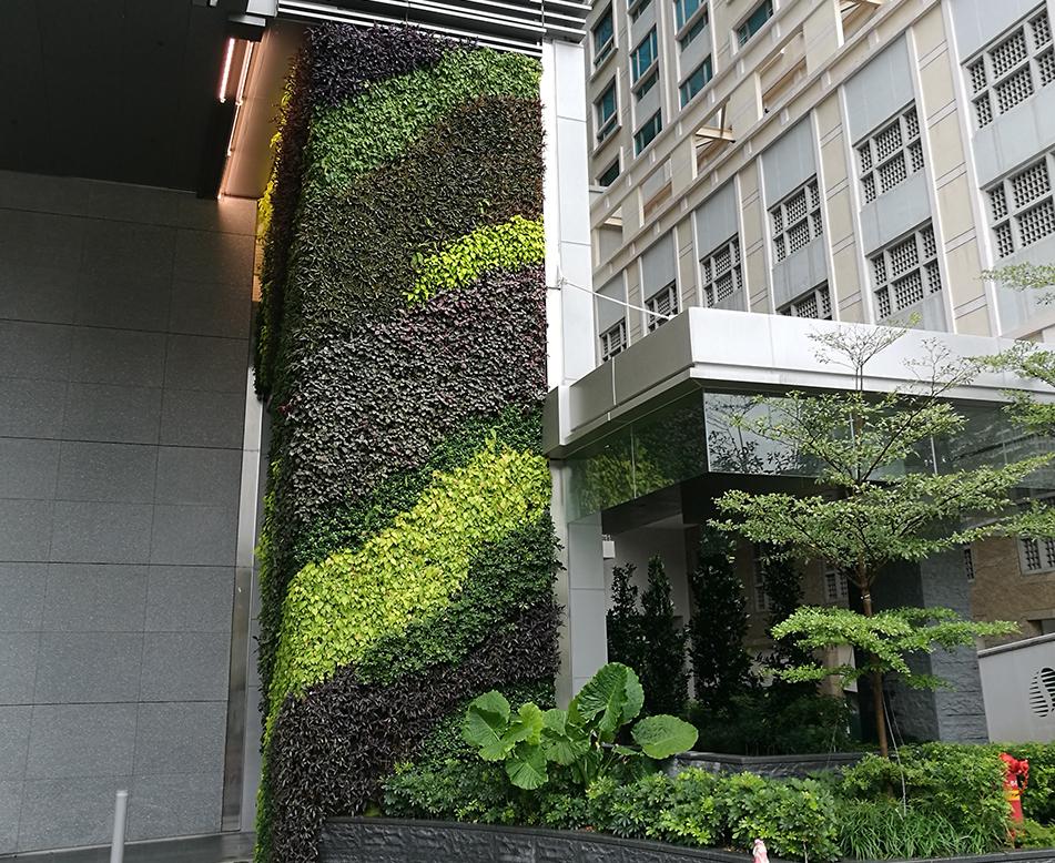 小区室外立体绿化