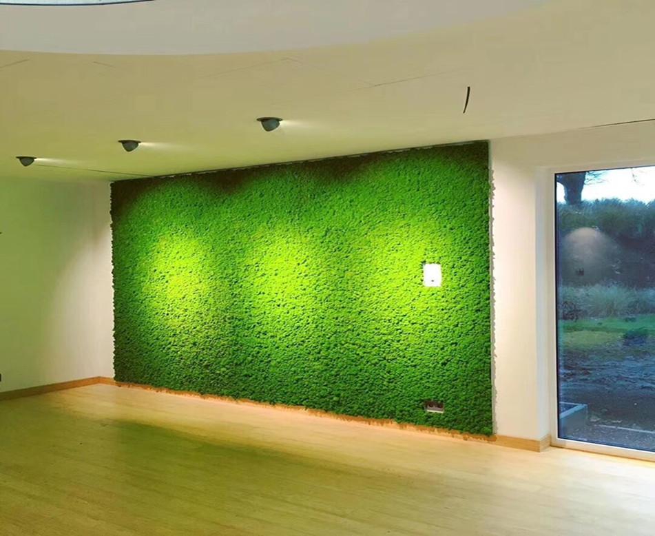 室内苔藓植物墙