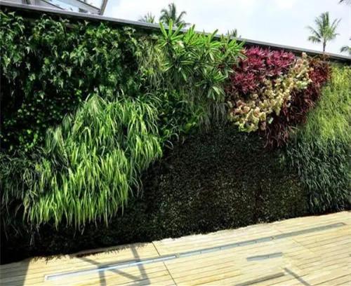 植物墙上选择合适植物的原则?