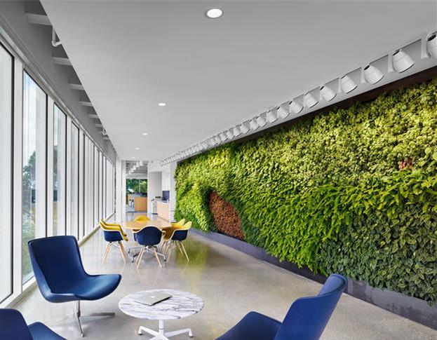 办公室植物墙怎么养才活得久?