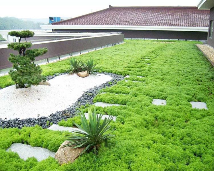屋顶绿化最常用哪些植物?
