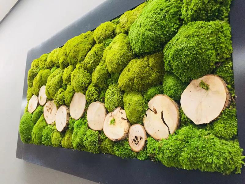 大型商场苔藓植物墙