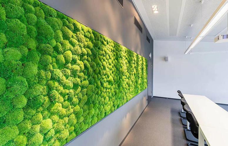 走进苔藓植物墙