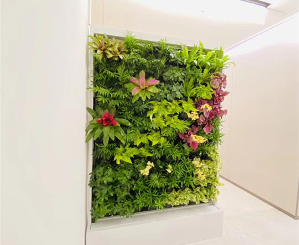 卫生间植物墙设计