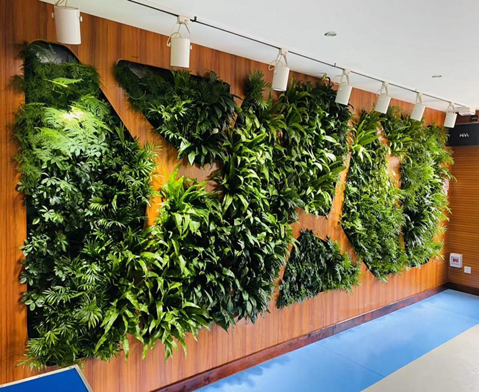 想给展馆做植物墙装饰,就找文源景观
