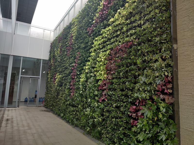 西安植物墙厂家