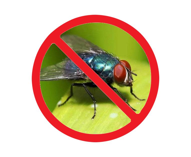 西安室内灭苍蝇