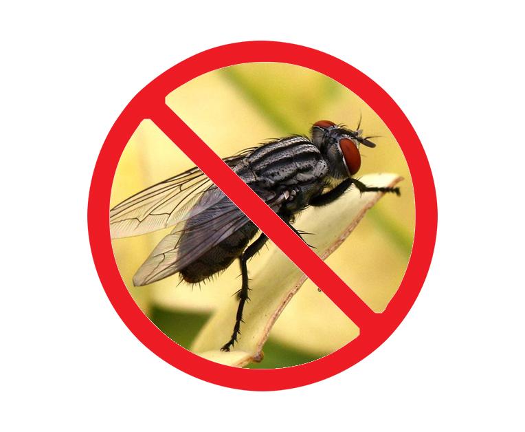 夏季灭蚊蝇