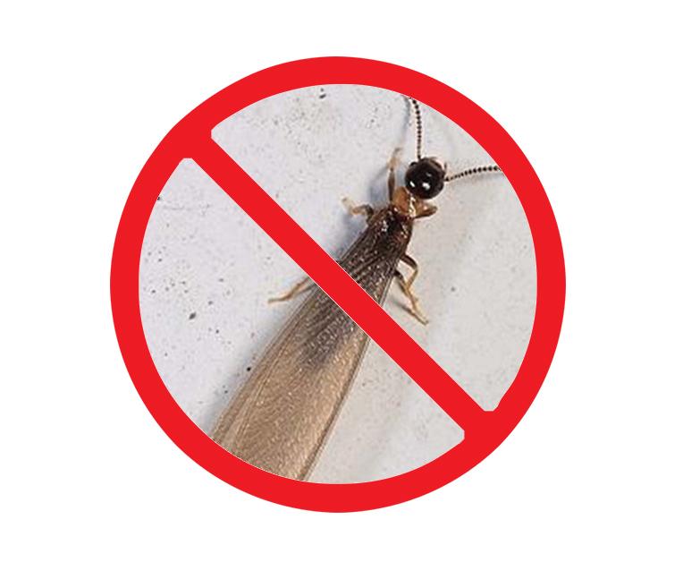 西安专业灭白蚁