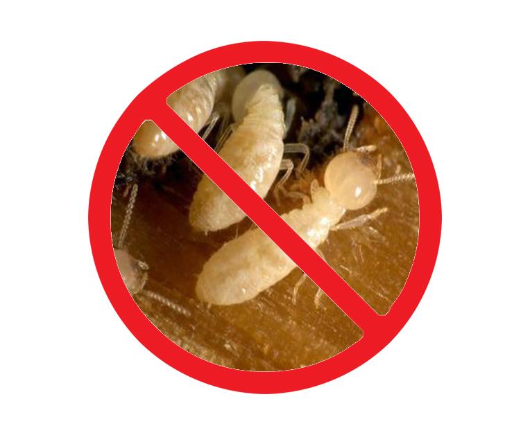 西安灭白蚁公司