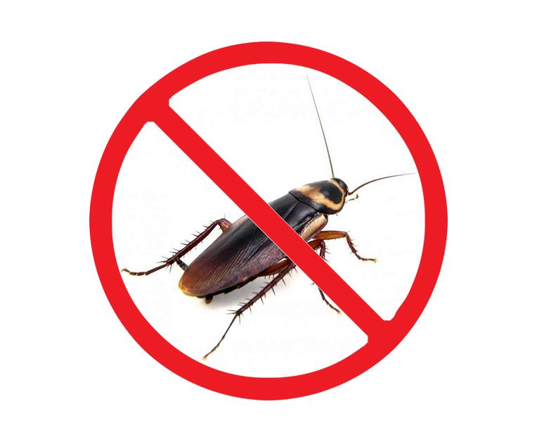 西安灭蟑螂服务