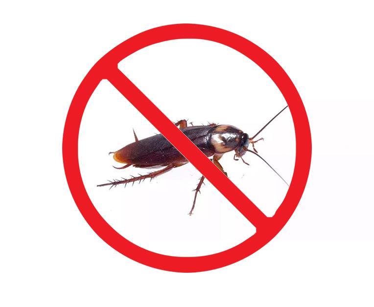 厨房灭蟑螂