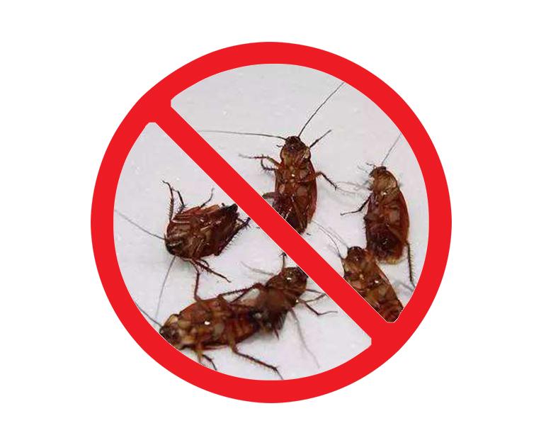 西安餐厅灭蟑螂