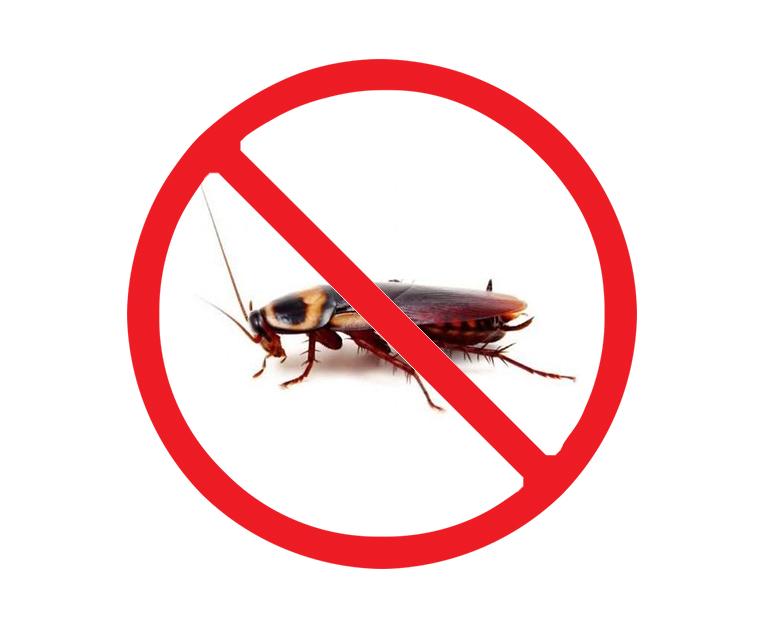 餐厅灭蟑螂