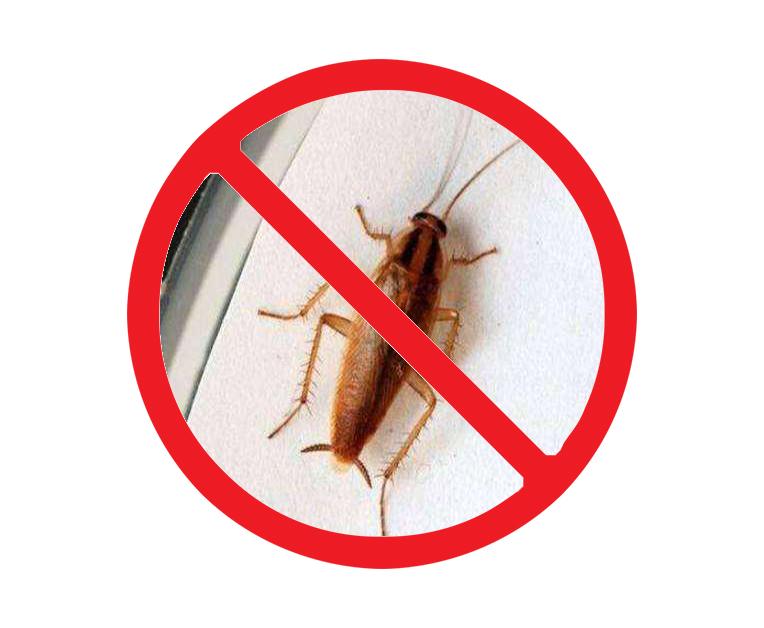 西安家庭灭蟑螂