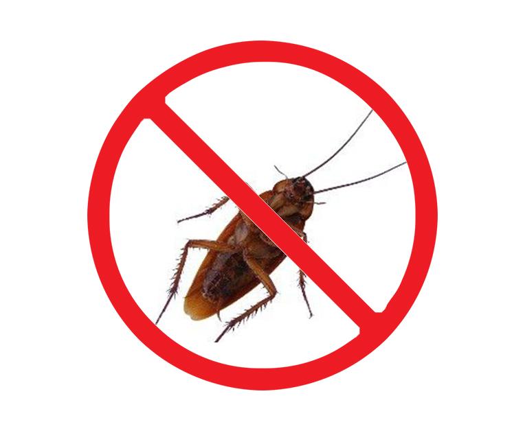 西安专业灭蟑螂