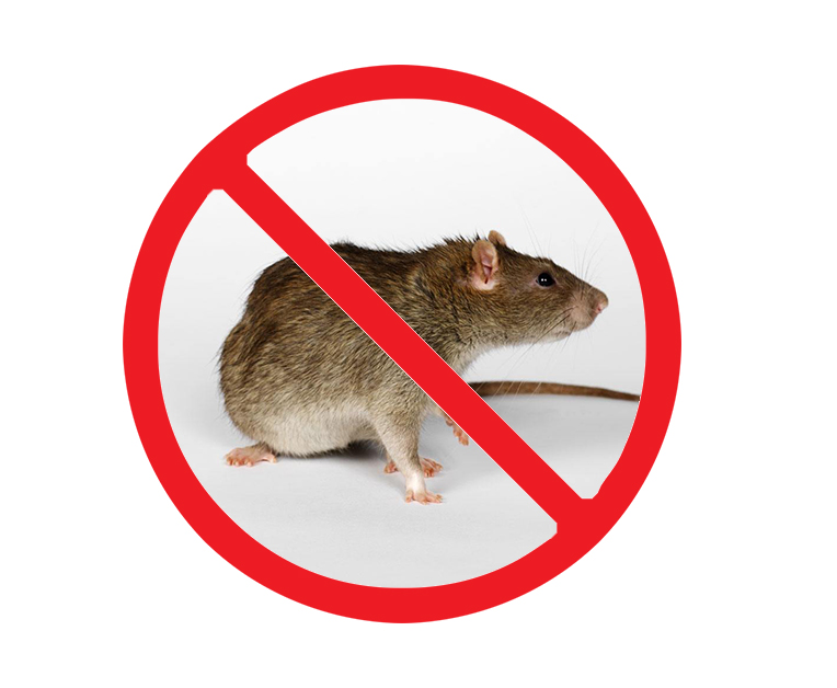 食堂灭老鼠